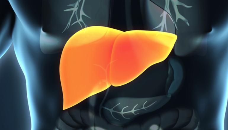 Zinātniskā darbība hepatoloģijā
